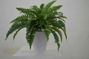 Высокое качество Искусственные растения Бостонского папоротника2
