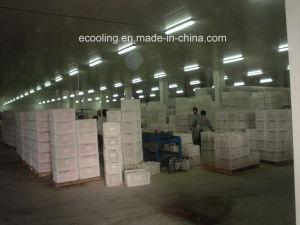 Compitetive Preis kundenspezifische Gemüse-und Frucht-neue haltene Kaltlagerung