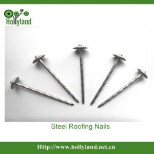Spijker van het Staal van het dak de Bouw Gebruikte