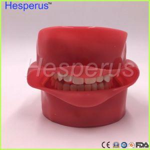 歯学部教授のモデルHesperusのための歯科幻影ヘッド