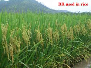 Natural de la PGR Brassinolide 0,01% SP