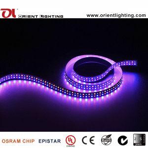 Indicatore luminoso di striscia flessibile di Epistar 240LEDs/M SMD2835 RGBA LED del Ce dell'UL