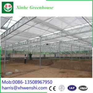 Qingzhou Xinhe Grennhouse horticultura