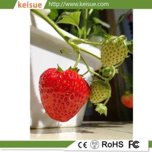 Azienda agricola micro di piantatura idroponica per le verdure/pomodori