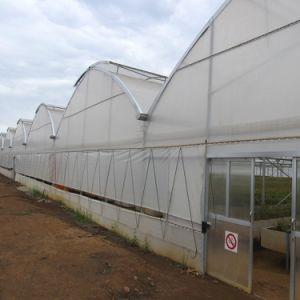 De Commerciële Serre van de Film van de landbouw met Hydroponic Systeem