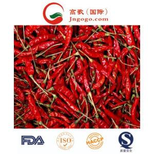Dp (deshidratado) Nueva Cosecha de Chile Rojo