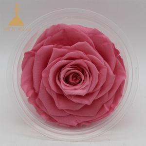 花嫁の花束の自然な永遠の維持されたローズの結婚の花