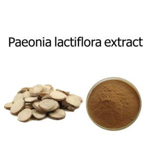 Extrait de plante de 10%Paeoniflorin Paeonia Lactiflora extraire