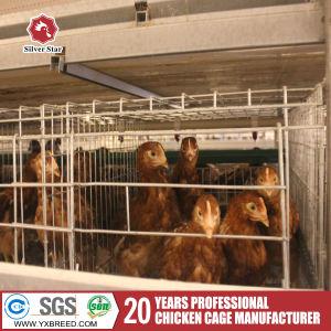 Huis het van uitstekende kwaliteit /Poultry van /Poultry van het Huis van de Kip wierp Dierlijke Loods af