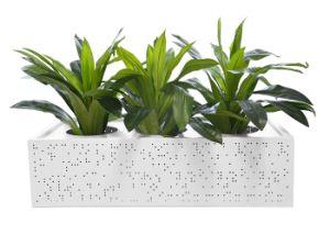 Цветы в горшочках/ потенциометра растений/ сеялку для дома сад