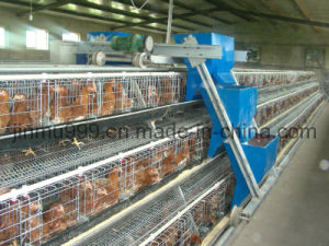 De Kooi van de Kip van het eierleggen voor het Landbouwbedrijf van het Gevogelte