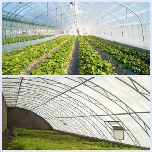 De HDPE anti inseto deriva Verduras Net para prova Inseto