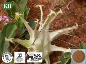 Produto Harpagoside Heallth medicina natural extrato de Ervas Garra do Diabo
