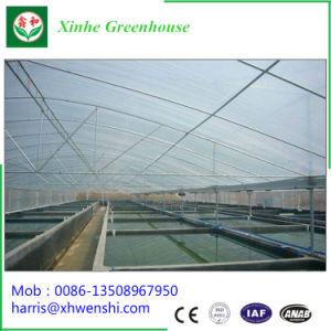 alle produkte zur verf gung gestellt vonqingzhou xinhe greenhouse horticulture co ltd. Black Bedroom Furniture Sets. Home Design Ideas