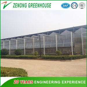 Túnel de polietileno verde PC House com sistema de sombreamento Externo