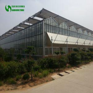Venloのタイプガラスの温室