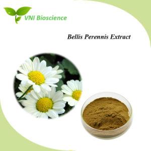 Certificación SGS ISO/Extracto de flor de Daisy Bellis perennis extraer