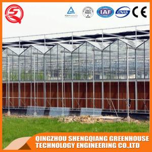 Gartenbau- und landwirtschaftliches PC Blatt-Gewächshaus für Tomate