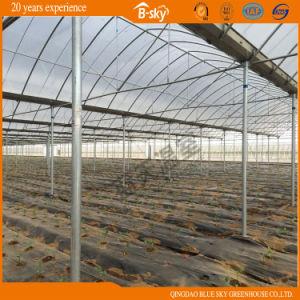 低価格の農業のマルチスパンのフィルムの温室