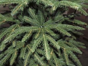 6feet PE van de Gift van de Decoratie van het huis Kunstmatige Kerstboom
