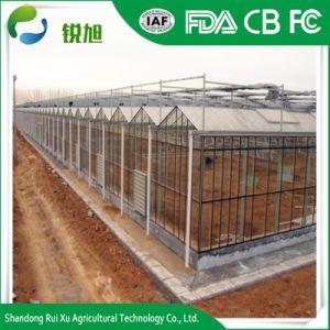 Serra della portata di prezzi di fabbrica di alta qualità multi/serra del policarbonato