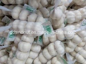 2 015 Китайский Нормальный Белый и Чистый Белый Чеснок