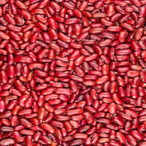 Bom preço chinês China orgânicos de fábrica feijões roxos vermelhos escuros para venda