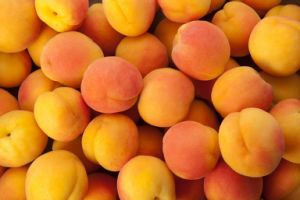 425gのフルーツによって缶詰にされる新しい杏子