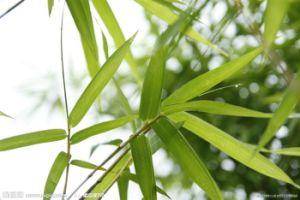 El 10%, el 70% de Silicio orgánico Extracto de la hoja de bambú