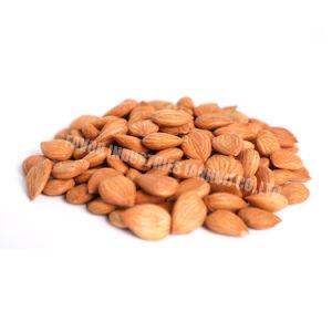 Halalの証明書の中国の新しい穀物の甘い杏子カーネル
