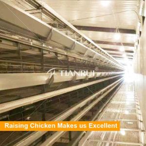 Tianrui Melhor Design resistente estrutura H Automática da gaiola de frango da camada da Bateria