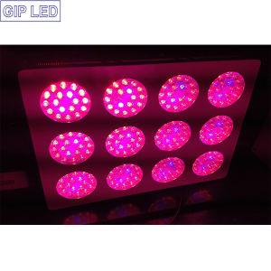 Lo mejor de espectro completo de super potencia 648W LED UFO Luz crecer