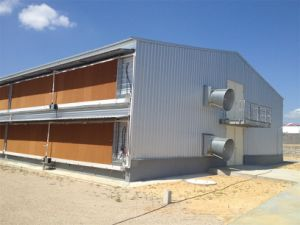 Estrutura de aço pré-fabricadas Casa de frango (KXD-PCH1453)