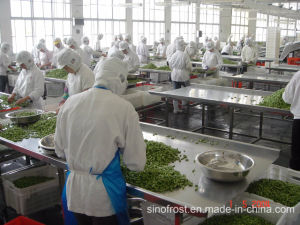 Разрез IQF зеленой фасоли, замороженных вырезать зеленой фасоли, IQF всего зеленая фасоль, Замороженные тушки зеленой стручковой фасоли