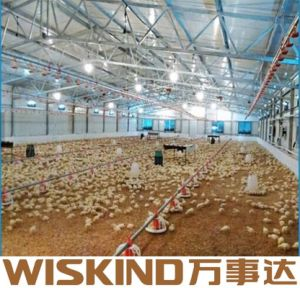 광속을%s 가진 Q345 넓은 경간 강철 구조물 닭 가금 건물