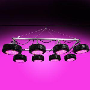 En todo el espectro de alta potencia de 1000W de luz LED de crecer para invernadero
