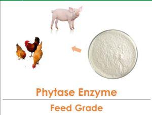 Haut L'activité enzymatique de la phytase de classe alimentaire