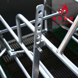 Cassa di figliata classica di vendita calda adatta a tutte le aziende agricole di maiale