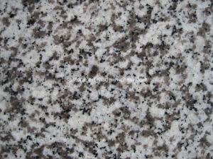 中国の広東省の白い花こう岩G439の花こう岩のフロアーリング
