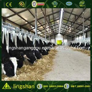 Полуфабрикат Steel Structure Cattle Farm в Новой Зеландии (SSCH)