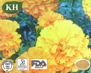 Chrysanthemum morifolium extraia o tratamento Wind-Heat, febre e dor de cabeça