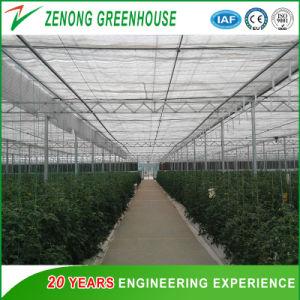Túnel de polietileno verde de filme plástico de cava-Dome House para experimentar a agricultura