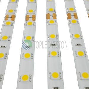 Luminosità 60LEDs/M dell'indicatore luminoso di striscia di SMD5050 LED alta