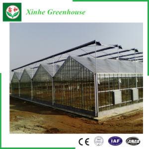 Поликарбонат/PC лист теплицы для овощей и цветов и фруктов/сельскохозяйственных