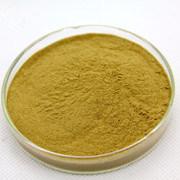 100% natural extracto com Leucoanthocyanin caquizeiro