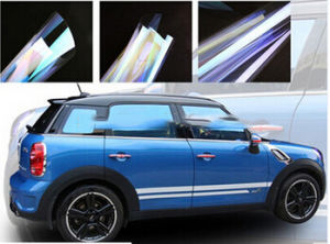 Camaleão profissional de alto desempenho na janela do carro de filme colorido