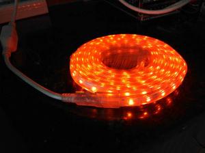 Novos Produtos 2017 produto inovador Corda de LED de Luz da Luz com marcação RoHS ETL