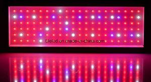 La pianta del LED si sviluppa chiara per l'azienda agricola verticale