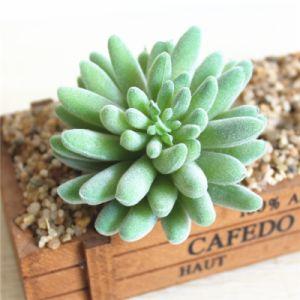 Сад оформлены Искусственные растения Succulents завод