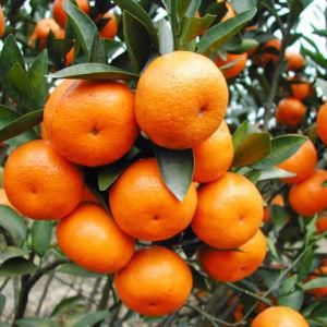 Poeder 52% van het aminozuur Organische Meststof